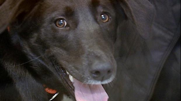 CTV National News: Dark side of picking pets