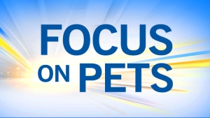 Focus on Pets