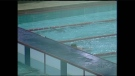 CTV Atlantic: inquest to probe teen's swimming pool death