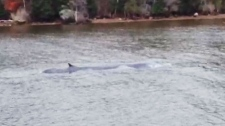 MyNews: Whale in distress in Nova Scotia