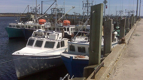 shag harbour, fishing boats, lobster