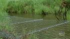 CTV Atlantic: Broken wildlife fences raise concern