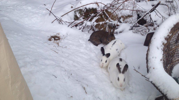 These rabbits seem a bit confused about the weather.  You won't be after you read the blog....