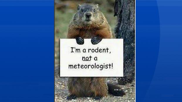 Groundhog humour