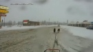 This still image from video by Allyson Mitton shows dogs pulling her sled towards a New Brunswick Tim Hortons (Allyson Mitton)