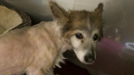 The RCMP are looking for the owner of a dog that was rescued from a pond in Lake Echo, N.S. (Nova Scotia RCMP)