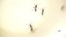 CTV Atlantic: Confirmed Zika virus in N.B.