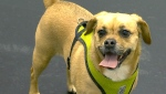 CTV News Channel: Rescuing pets left behind