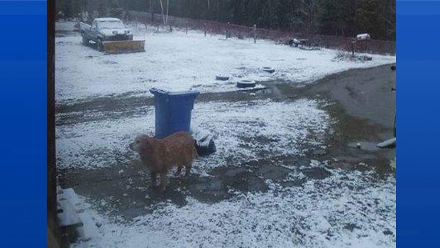 Linda Mann's dog doesn't look too please with the snow this morning in Upsalquitch NB!
