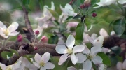 CTV Atlantic: 84th-annual Apple Blossom