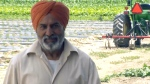 Farmer uses turban to rescue woman from river