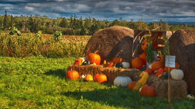 Sarah Norris shared this photo of a gorgeous fall display in Masstown NS