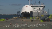Only the seagulls were in line at the ferry crossing between Wood Islands, P.E.I., and Caribou, N.S., on Friday.