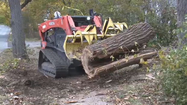 One tree removal company in Sydney is working to get rid of what's left on people's properties from the Thanksgiving storm.