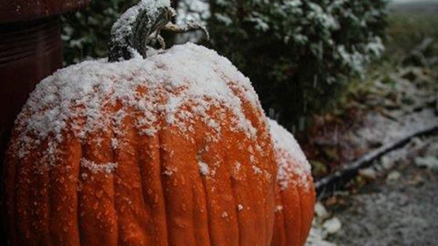 There was frost on the pumpkins in the Maritimes last night, but the gourds were covered in snow in our Nation's capital!