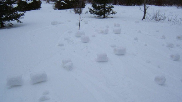 Christine Sharbell woke up to a field of snow balls behind her house in Portage PEI this morning.