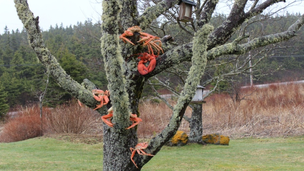 lobster in a tree