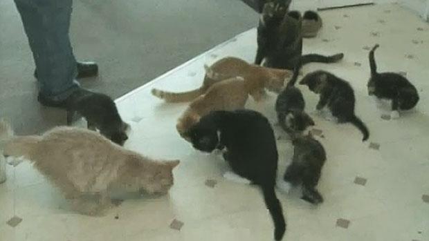 Antigonish Cat Rescue